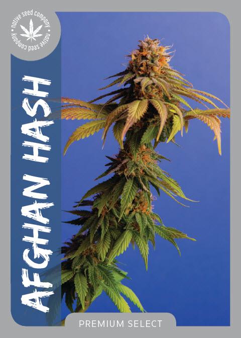 Premium Seed by Native Seed - Afghan Hash