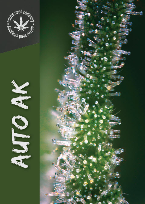 Collector Seed by Native Seed - Auto AK