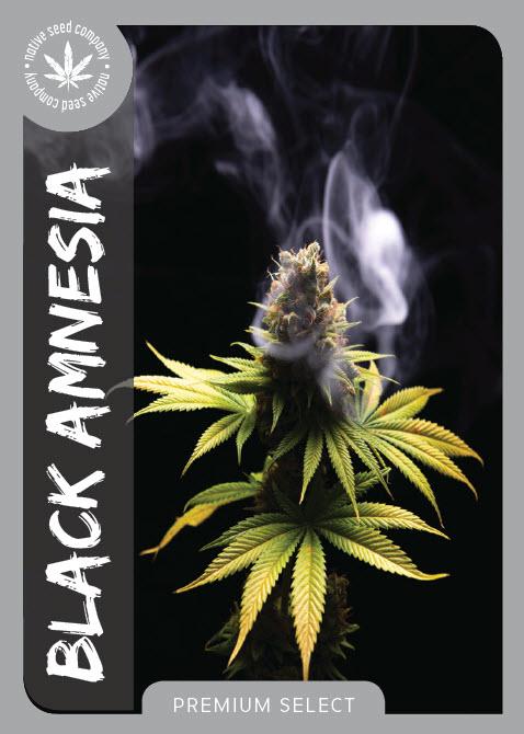 Premium Seed by Native Seed - Black Amnesia
