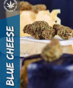 Native Seed Co. Collector Card - Blue Cheese