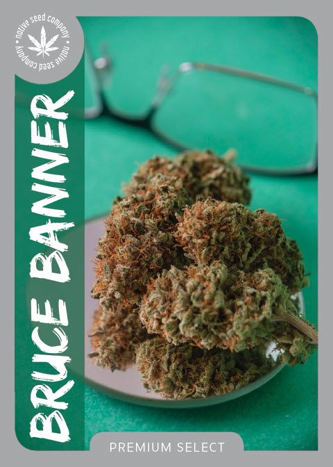 Premium Seed by Native Seed - Bruce Banner