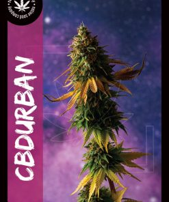 Premium Seed by Native Seed - CBDurban