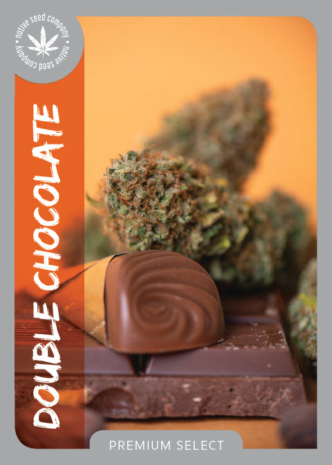 Premium Seed by Native Seed - Double Chocolate