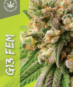 Collector Seed by Native Seed - G13 FEM