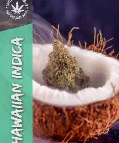 Native Seed Co. Collector Card - Hawaiian Indica