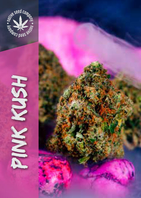 Native Seed Co. Collector Card - Pink Kush