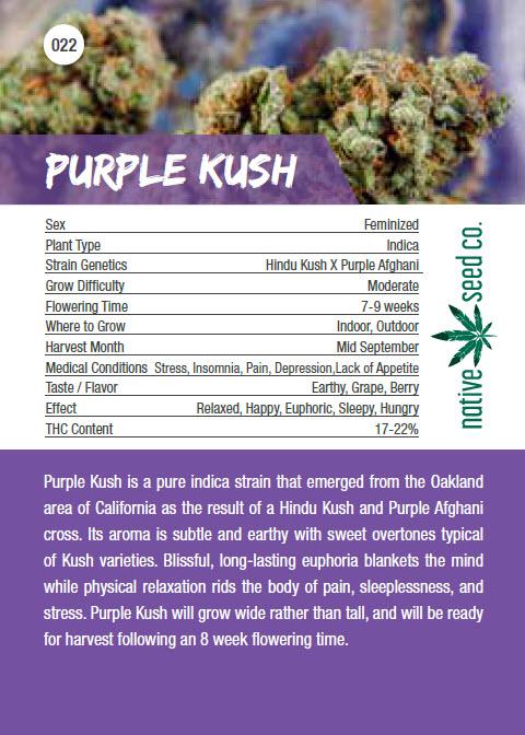 Native Seed Co. Collector Card - Purple Kush - Back