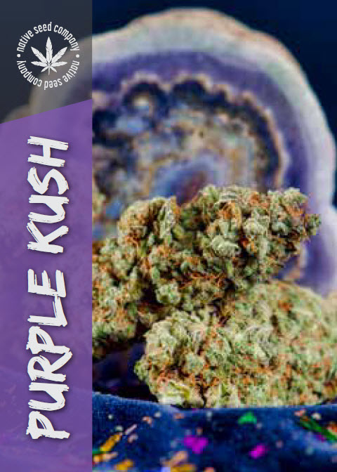 Native Seed Co. Collector Card - Purple Kush