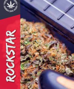Native Seed Co. Collector Card - Rockstar