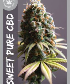 Premium Seed by Native Seed - Sweet Pure CBD