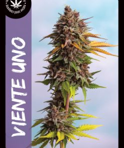 Premium Seed by Native Seed - Viente Uno