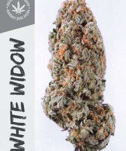 Native Seed Co. Collector Card - White Widow